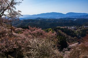 吉野山の桜の写真素材 [FYI04853569]