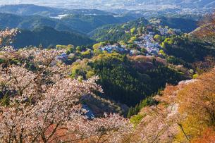 吉野山の桜の写真素材 [FYI04853574]