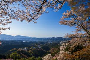 吉野山の桜の写真素材 [FYI04853581]