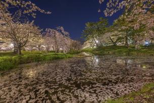 弘前公園の桜 ライトアップの写真素材 [FYI04853592]