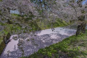 弘前公園の桜の写真素材 [FYI04853604]