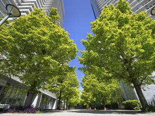新緑の高層マンション街の写真素材 [FYI04853797]