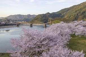 錦帯橋と桜の写真素材 [FYI04853879]