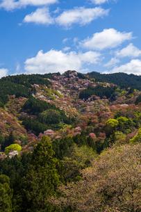 吉野山の桜の写真素材 [FYI04853960]