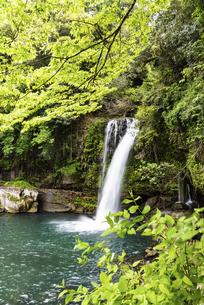 新緑の慈恩の滝の写真素材 [FYI04853974]
