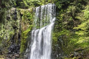 新緑の桜滝の写真素材 [FYI04853976]