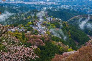 吉野山の桜と雲海の写真素材 [FYI04853982]