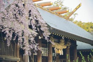 北海道神宮境内の写真素材 [FYI04853999]