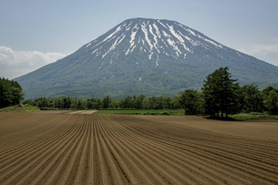 羊蹄山と農場の写真素材 [FYI04854005]