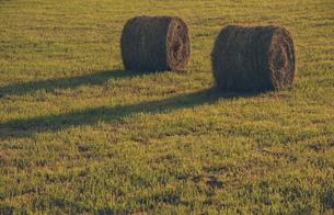 夕暮れの牧草ロールの写真素材 [FYI04854015]