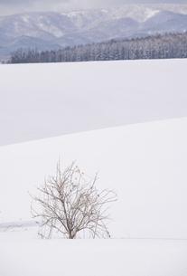 冬の美瑛の写真素材 [FYI04854019]
