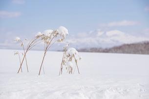 冬の美瑛の写真素材 [FYI04854021]