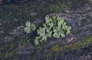 木の割れ目から成長した草の写真素材 [FYI04854071]