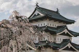 弘前城と桜の写真素材 [FYI04854073]