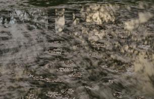 弘前公園の流れる桜の花びらの写真素材 [FYI04854077]