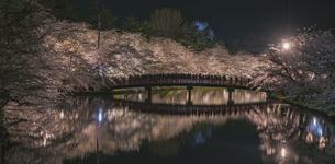 弘前公園の春陽橋と夜桜の写真素材 [FYI04854081]