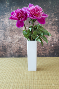 和室においた白い花瓶に活けたシャクヤクの写真素材 [FYI04854183]