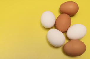 黄色背景の鶏卵の写真素材 [FYI04854188]