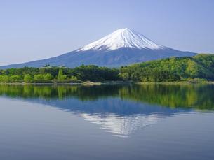 山梨県 初夏の河口湖に映る富士山の写真素材 [FYI04854191]