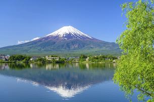 山梨県 初夏の河口湖より富士山の写真素材 [FYI04854197]