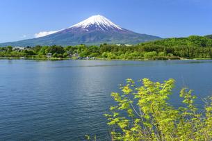 山梨県 初夏の河口湖より富士山の写真素材 [FYI04854198]
