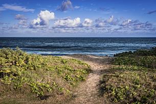 【旅行】南国の青い海と入道雲が浮かぶ青空 ハワイの写真素材 [FYI04854224]