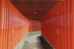 日本海に面した絶景神社、福徳稲荷神社(山口県下関市)の写真素材 [FYI04854329]