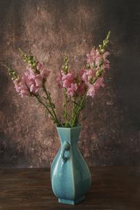 青い花瓶に活けたピンクのストックの写真素材 [FYI04854360]