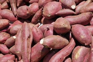 収穫されたサツマイモの写真素材 [FYI04854363]