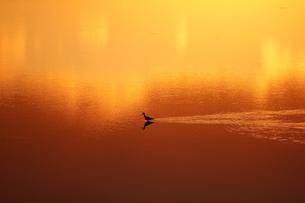 暮色の水面とサギの写真素材 [FYI04854682]