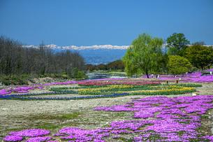春景の写真素材 [FYI04854767]