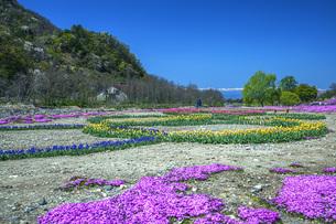 春景の写真素材 [FYI04854768]
