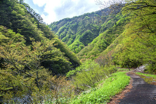 新緑の赤芝峡の写真素材 [FYI04854789]