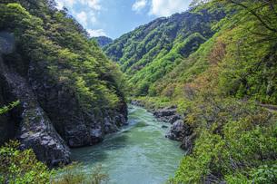 新緑の赤芝峡の写真素材 [FYI04854790]
