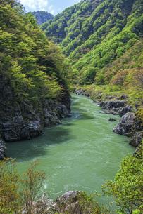 新緑の赤芝峡の写真素材 [FYI04854791]