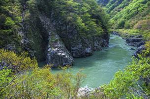 新緑の赤芝峡の写真素材 [FYI04854792]