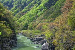 新緑の赤芝峡の写真素材 [FYI04854793]