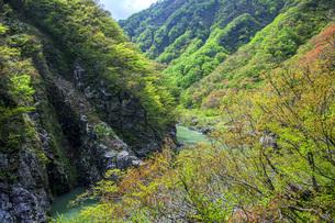 新緑の赤芝峡の写真素材 [FYI04854794]