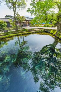 新緑の忍野八海の写真素材 [FYI04854819]