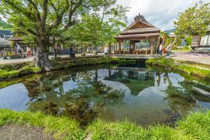 新緑の忍野八海の写真素材 [FYI04854821]