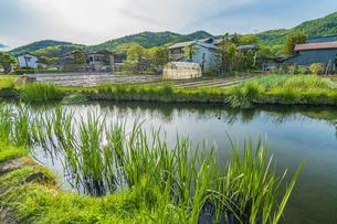 新緑の忍野八海の写真素材 [FYI04854824]
