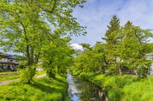 新緑の忍野八海の写真素材 [FYI04854828]