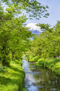 新緑の忍野八海の写真素材 [FYI04854829]