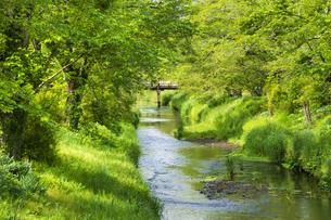 新緑の忍野八海の写真素材 [FYI04854830]