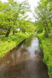 新緑の忍野八海の写真素材 [FYI04854834]
