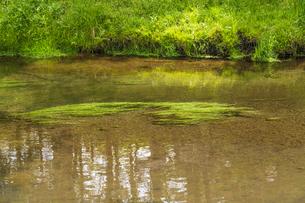 新緑の忍野八海の写真素材 [FYI04854838]