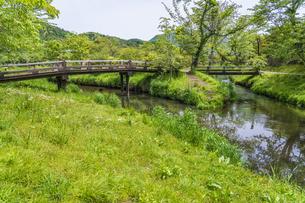 新緑の忍野八海の写真素材 [FYI04854840]