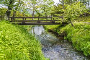新緑の忍野八海の写真素材 [FYI04854842]