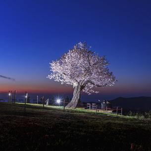 夜桜の写真素材 [FYI04854972]