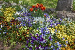 春のやくらいガーデンの写真素材 [FYI04854981]